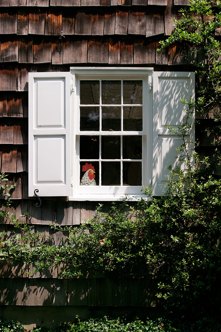 chicken-in-window