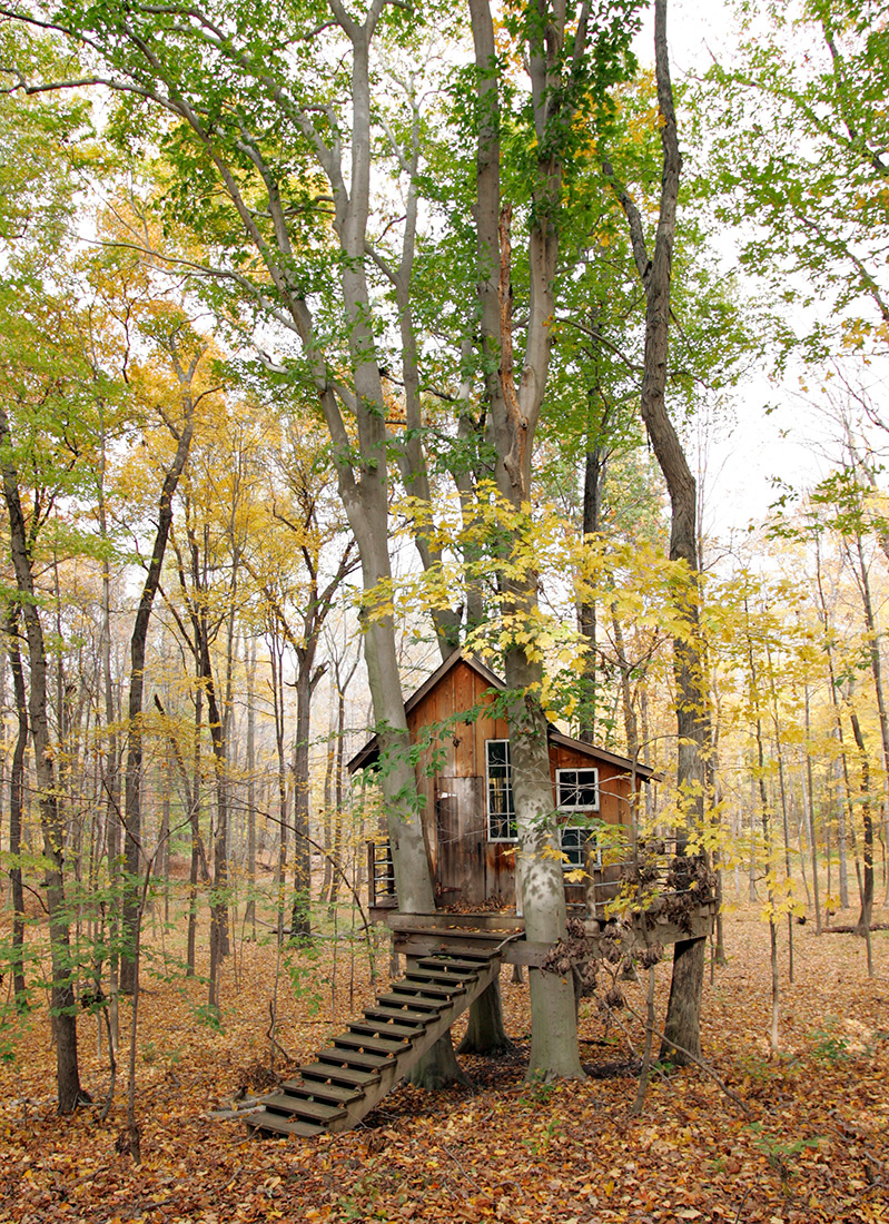 tree-house-copy
